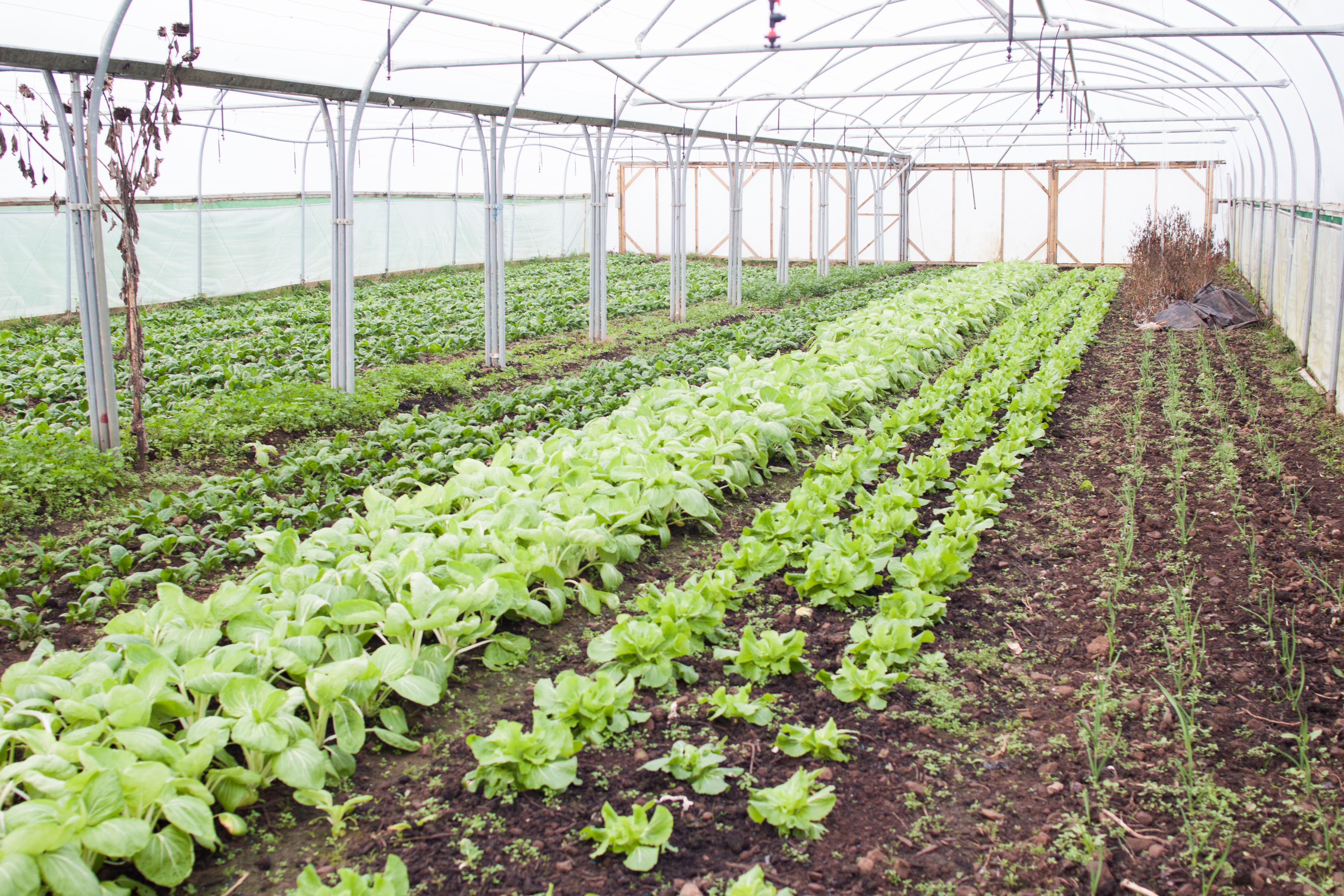 Benefit Producers Organic Food