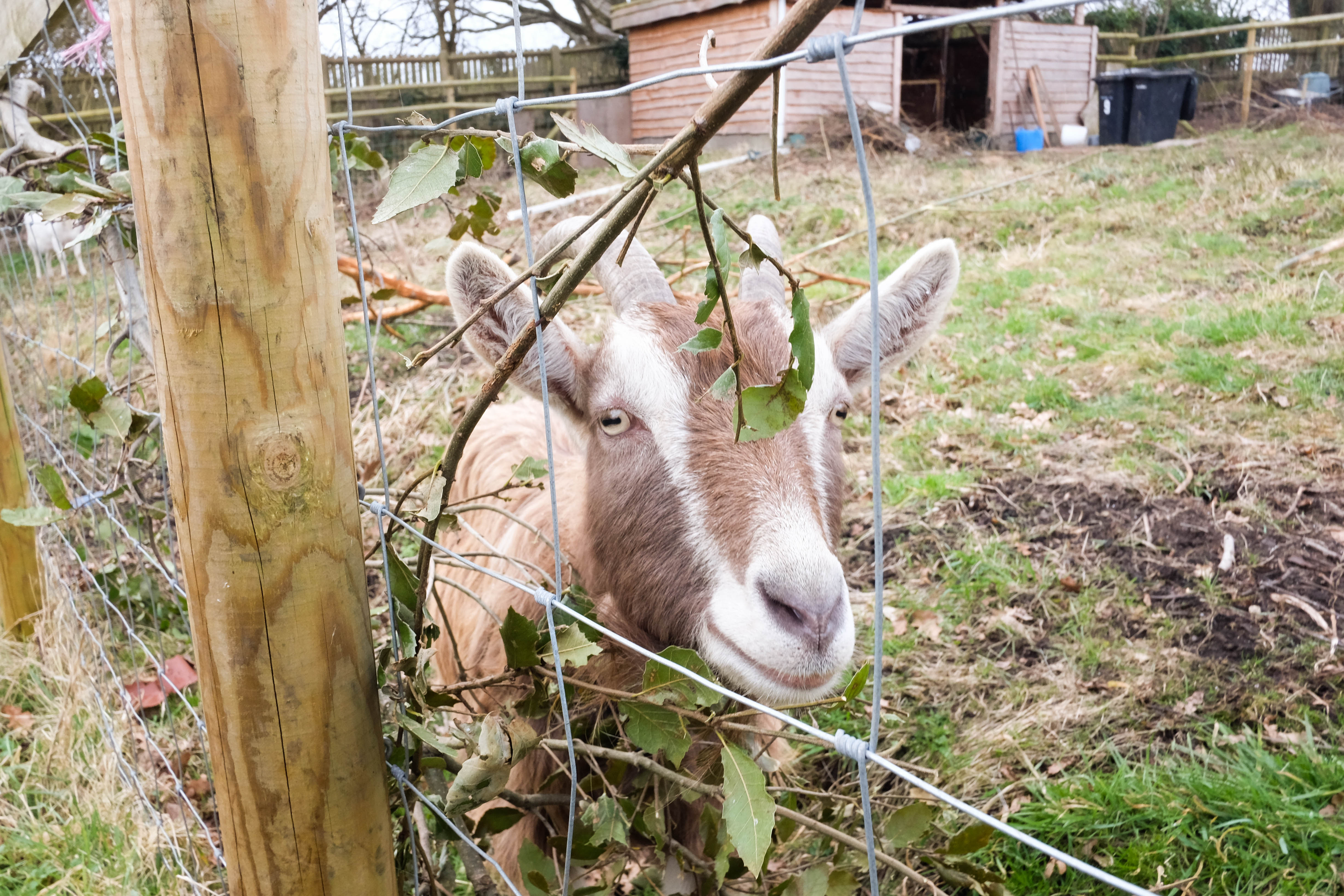Our Members: Street Goat - Bristol Food Producers